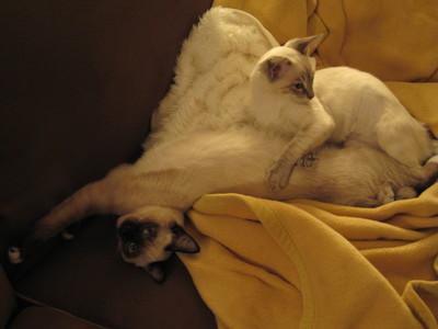 New_kittens_431