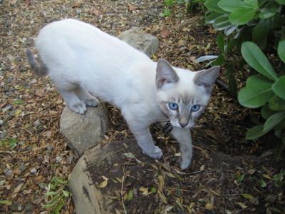 New_kittens_437